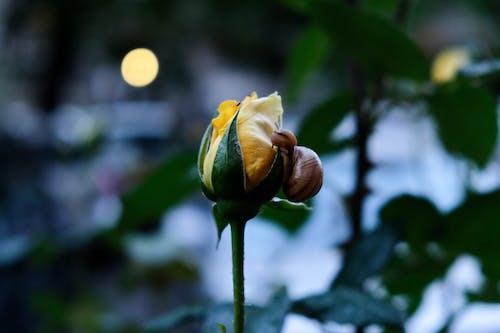 Free stock photo of blur, climb, snail