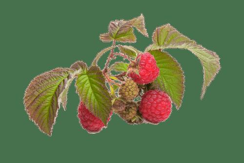 Gratis lagerfoto af bær, frisk, frugt, hindbær
