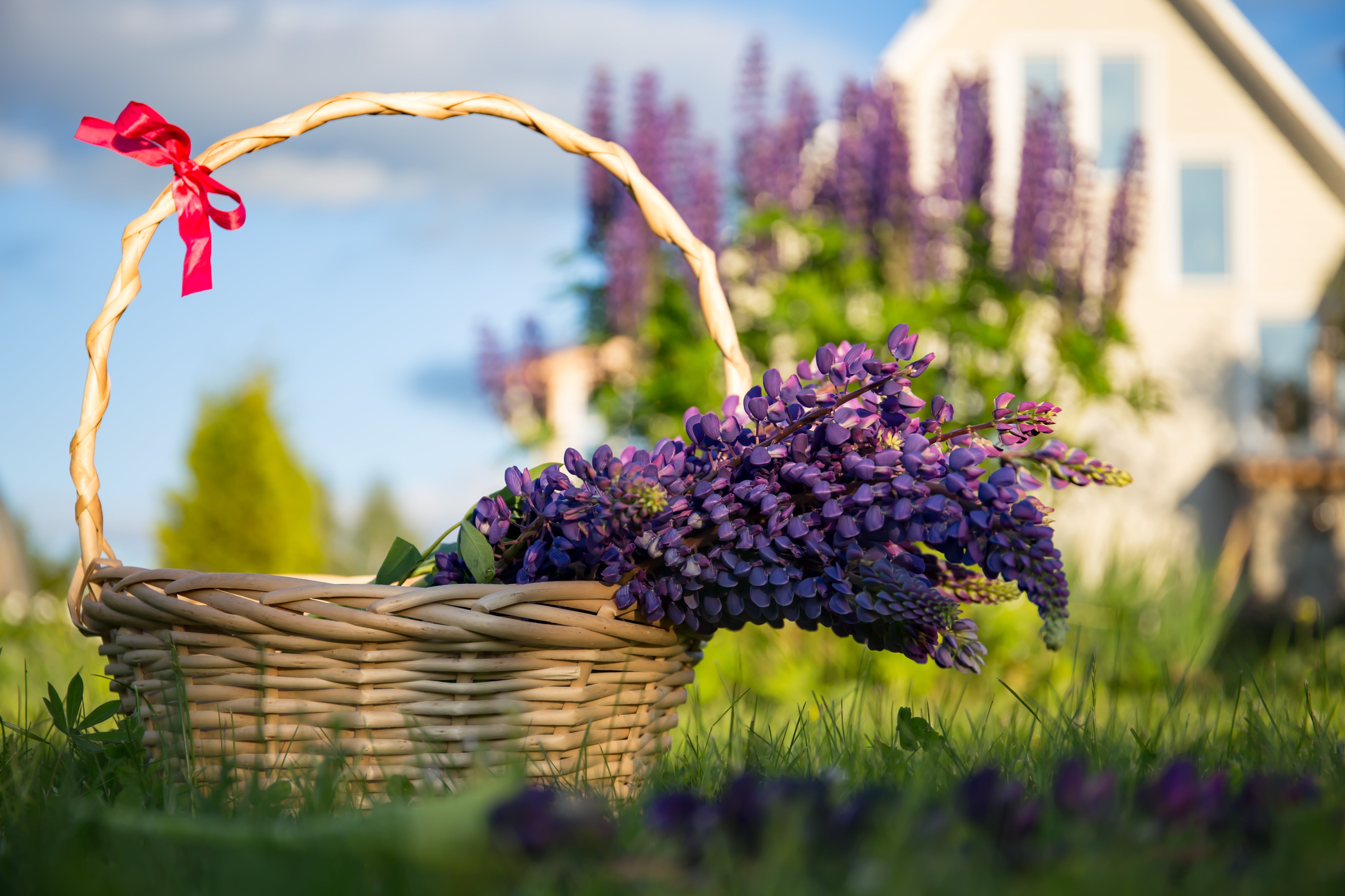 Free stock photo of basket, beautiful flowers, bouquet, bright