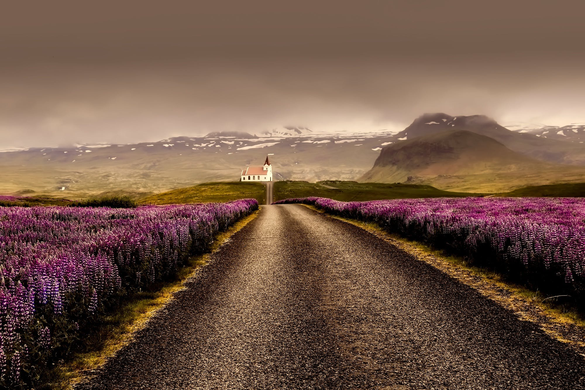 Gray Road Surrounded With Purple Flower Field
