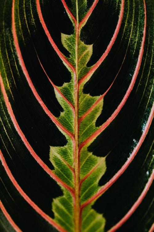 Kostenloses Stock Foto zu blatt, botanisch, hintergrund