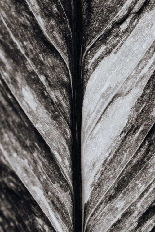 Black and White Macro Photo of a Leaf