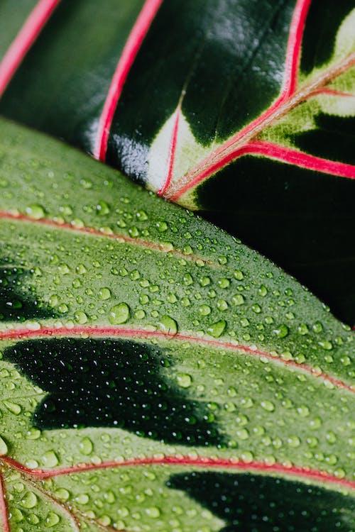 คลังภาพถ่ายฟรี ของ ต้นไม้, ธรรมชาติ, น้ำค้าง, ฝนตก