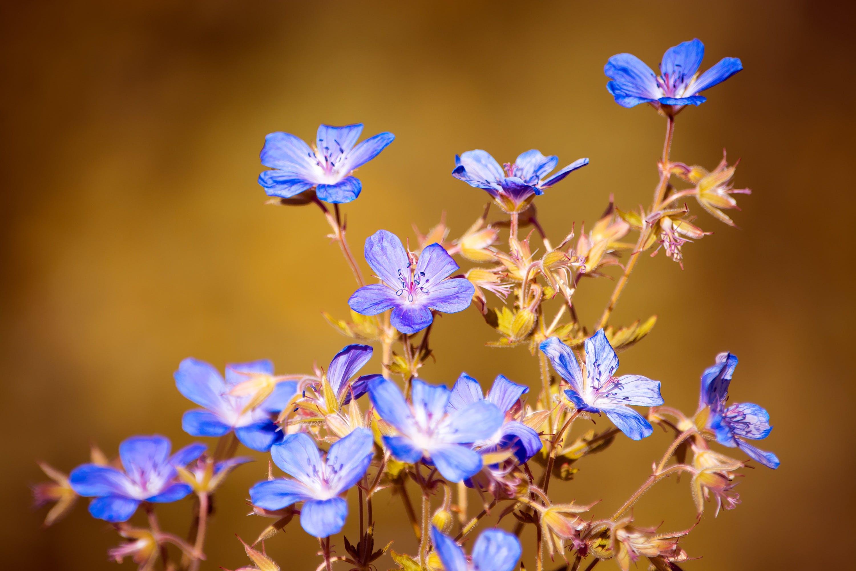 Macro Photography of Blue Petaled Flowers