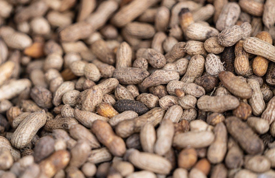 Fotos de stock gratuitas de agricultura, asando, cacahuetes