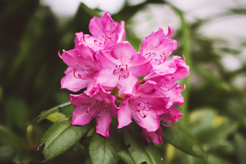 Darmowe zdjęcie z galerii z botaniczny, flora, jasny, kwiat