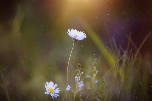 Nature wallpaper of nature, flowers, grass, petals