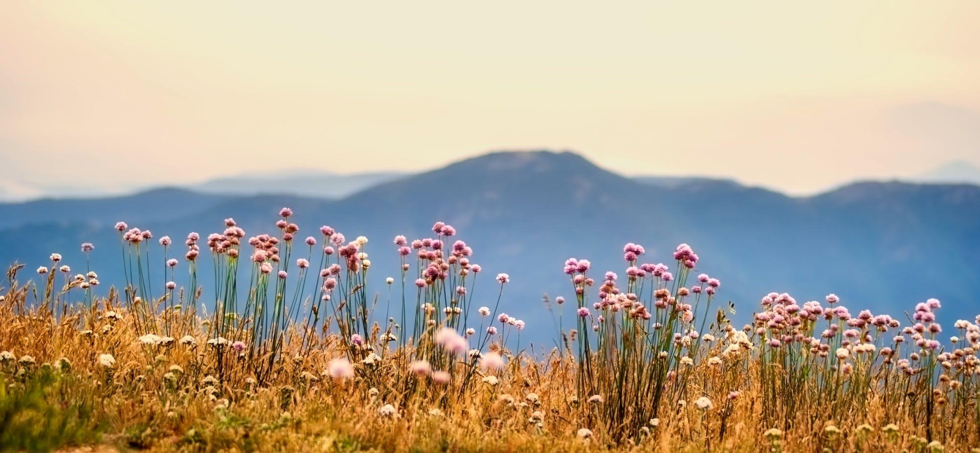 Gratis lagerfoto af bane, bjerge, blomster, flora
