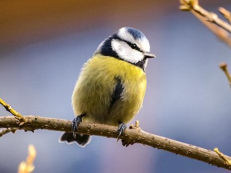 Free stock photo of bird, animal, tree, beak