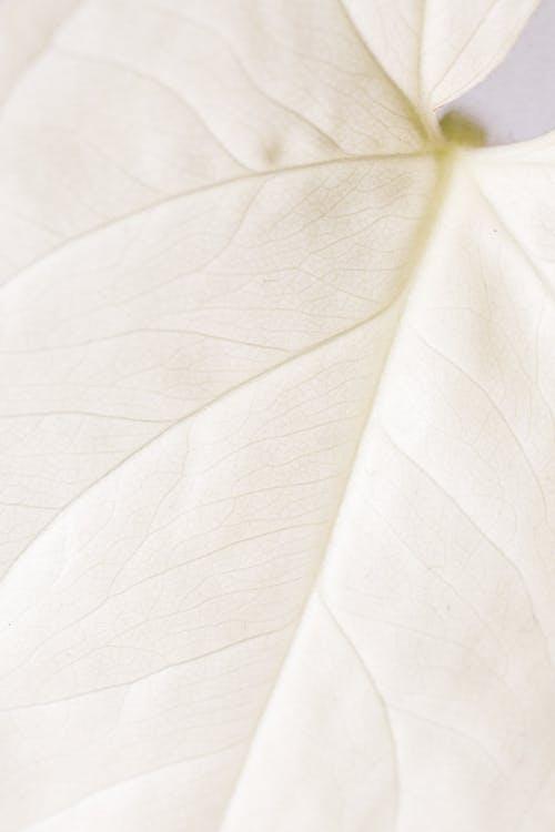 Macro Photo of a White Leaf