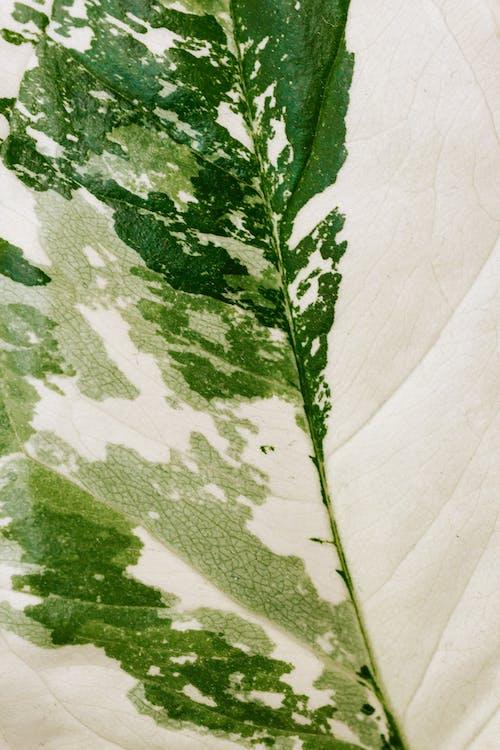 Macro Photo of a Green and White Leaf