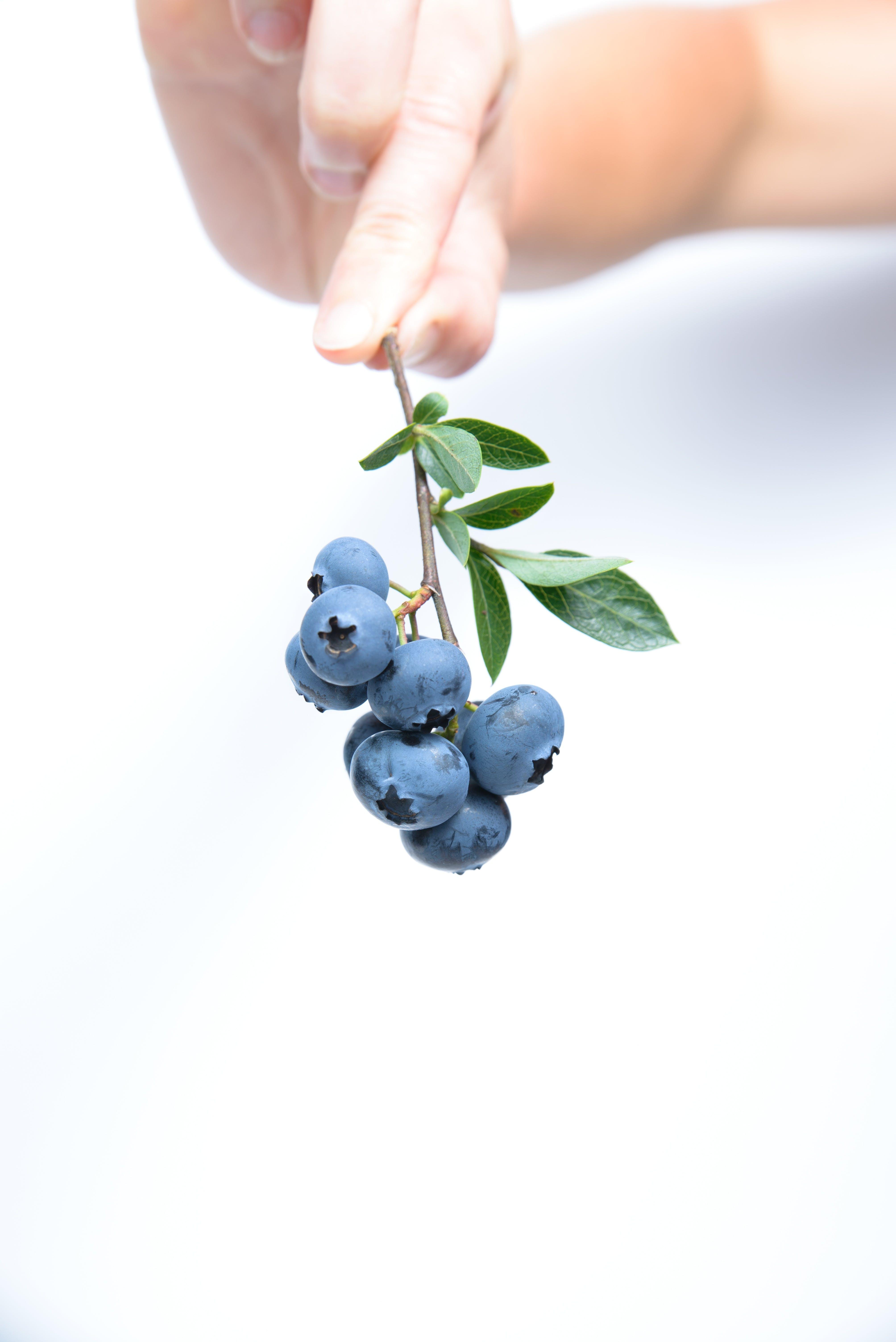 Darmowe zdjęcie z galerii z jagody, jedzenie, niebieski
