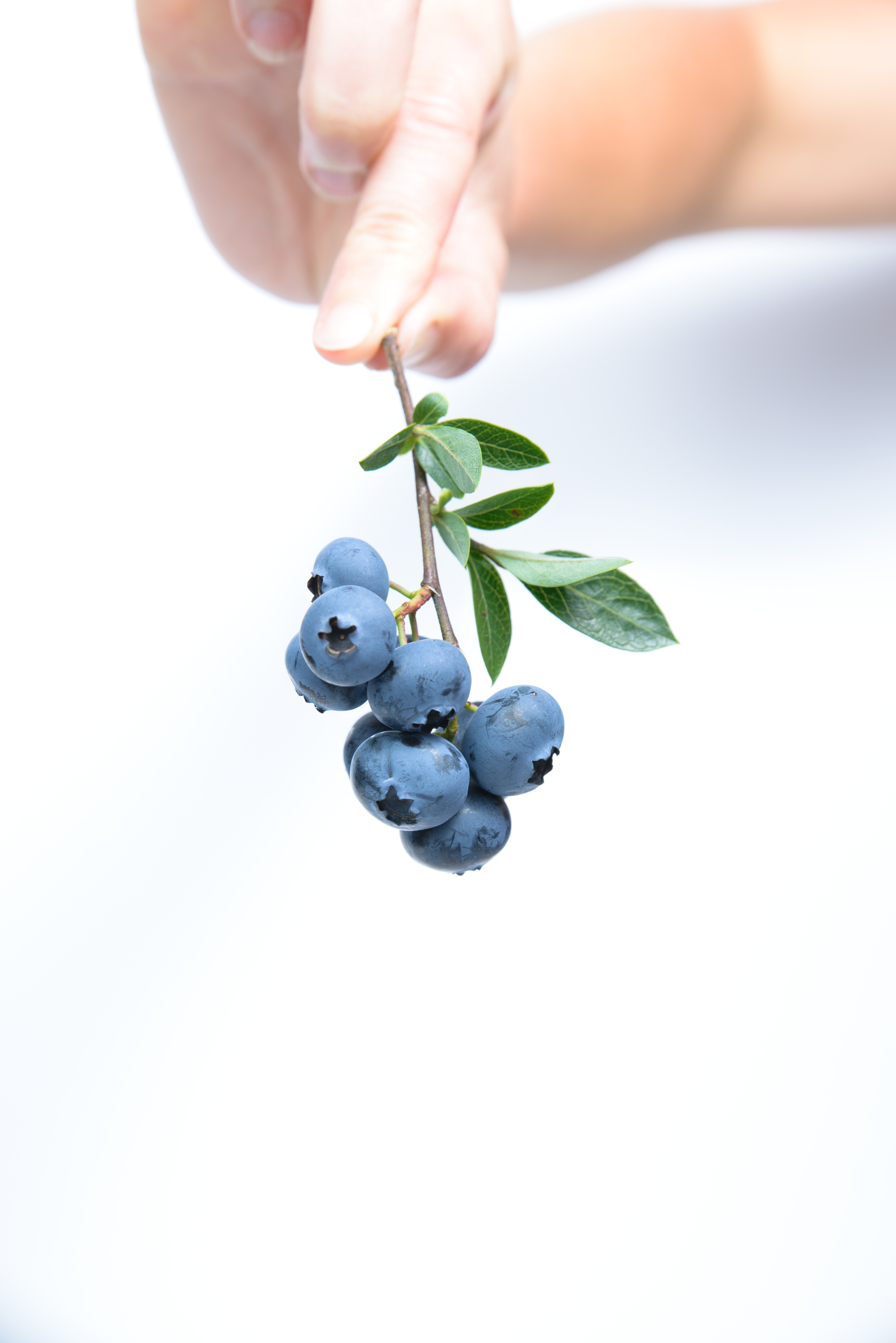 Free Stock Photo Of Berries Blueberries Food