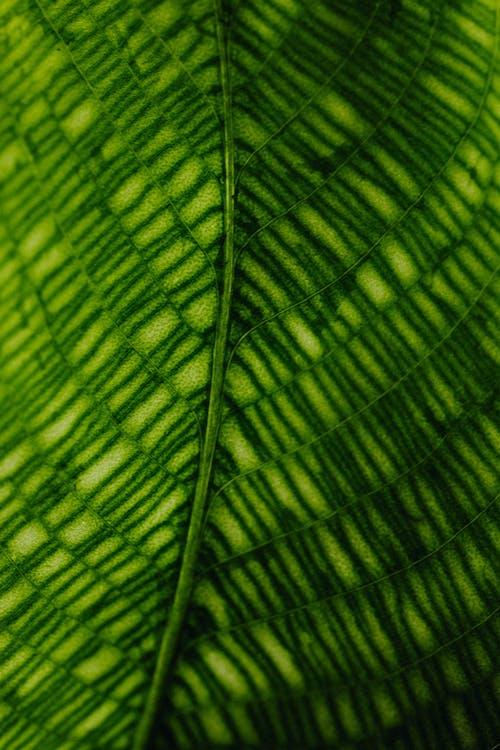 Macro Photo of a Leaf