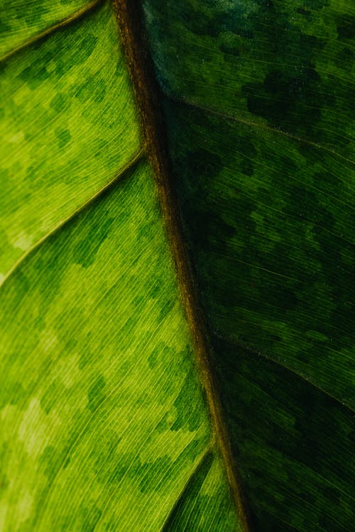 Macro Photo of a Leaf