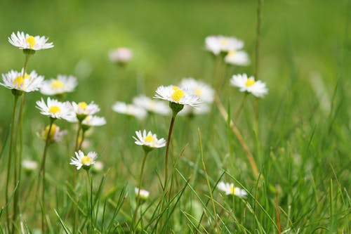 White Flowers Surrounded by Grasses