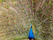 bird, pattern, animal