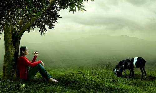 Δωρεάν στοκ φωτογραφιών με άνθρωπος, άτομο, βουνό, γρασίδι