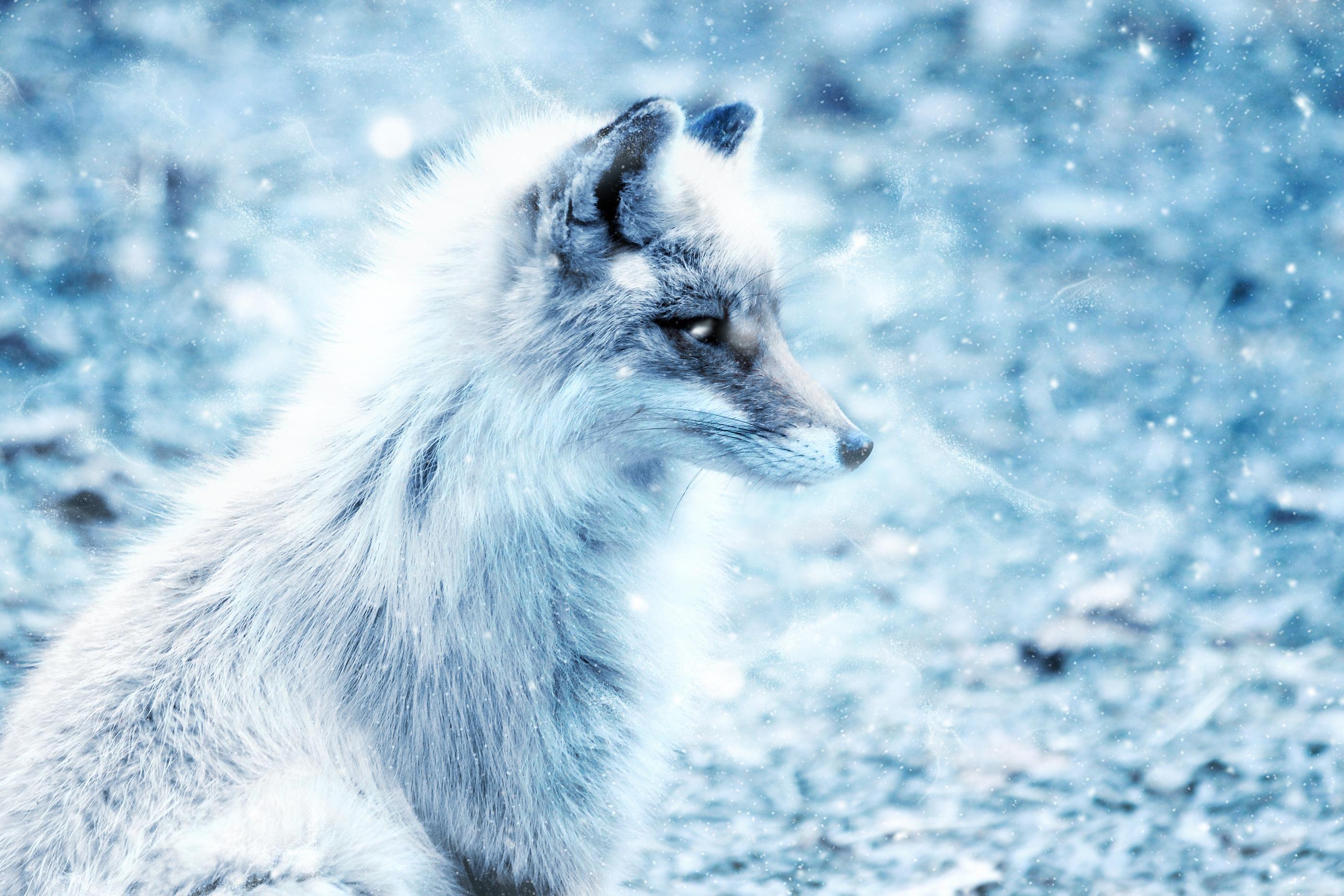 красивые картинки на аву лисы белые