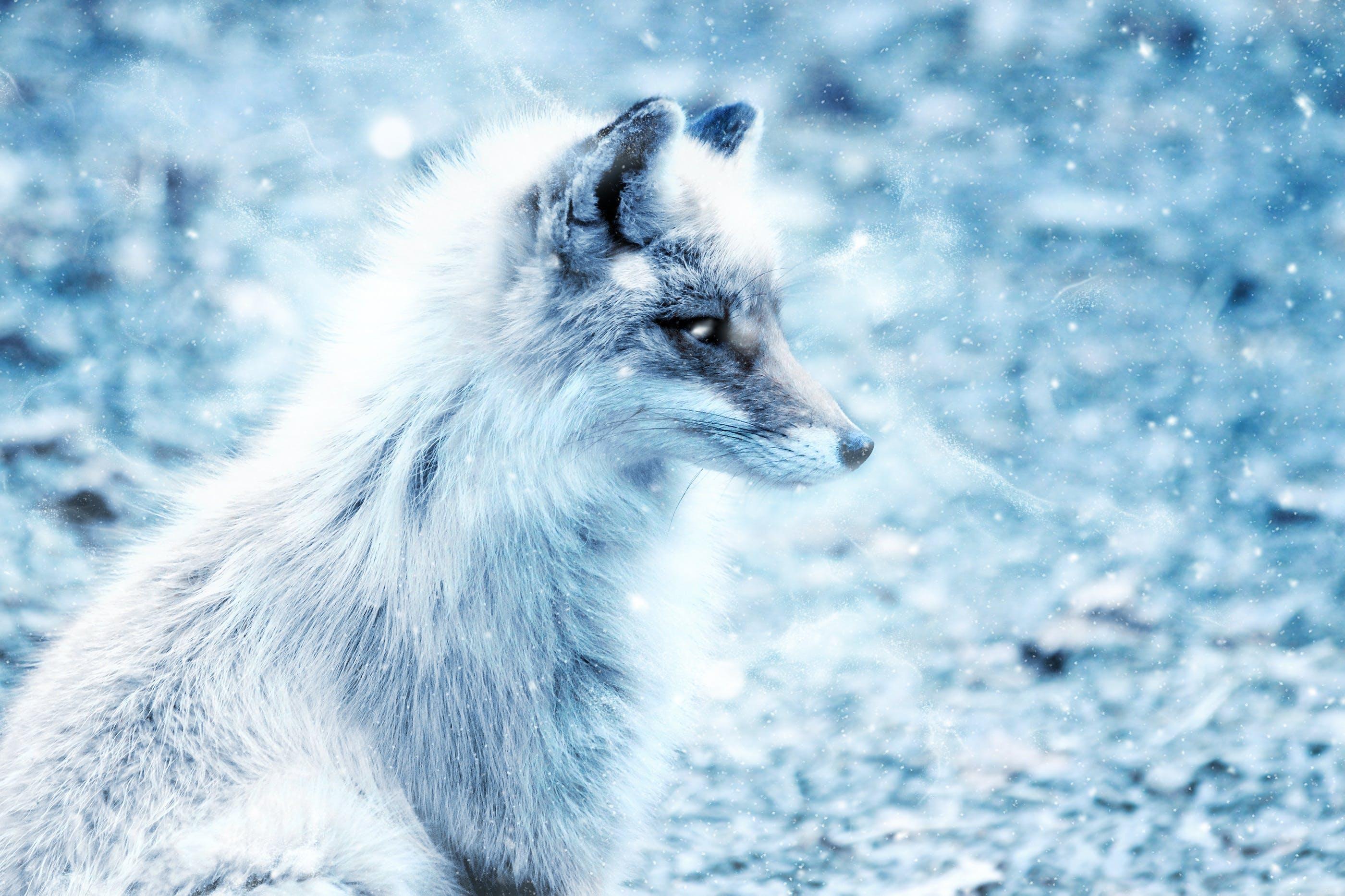 Základová fotografie zdarma na téma denní světlo, divoký, kožešina, led