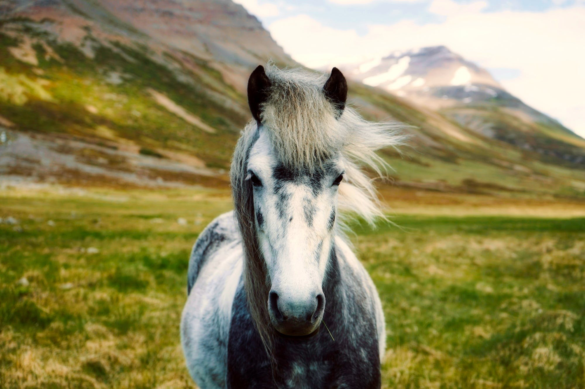 White Horse on Body of Mountain