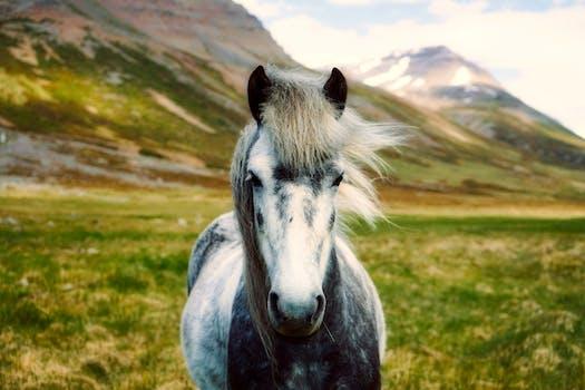 White Horse On Body Of Mountain