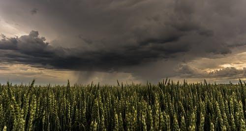 Gratis stockfoto met akkerland, boerderij, bouwland, deprimerend