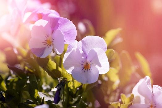 Free stock photo of light, nature, flowers, garden