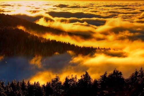Fotos de stock gratuitas de amanecer, arboles, bonito, bosque
