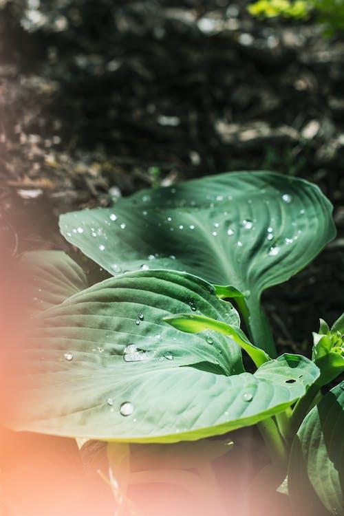 Kostenloses Stock Foto zu blatt, draußen, farbe, flora
