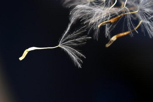 Free stock photo of nature, flowers, dark, summer