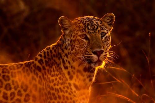 Gratis lagerfoto af dyr, dyrefotografering, dyreliv, fare