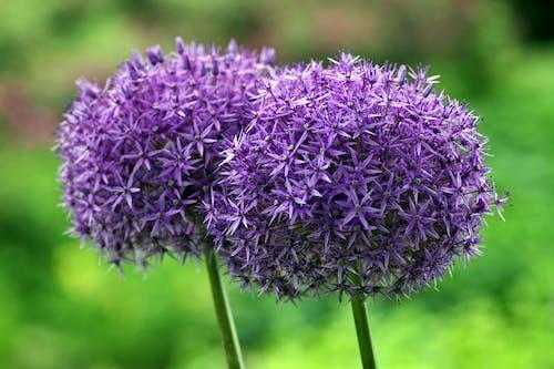 Immagine gratuita di concentrarsi, crescita, delicato, fiori