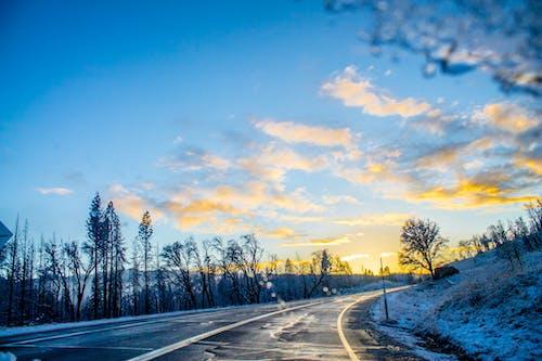 감기, 경치, 꽁꽁 언, 날씨의 무료 스톡 사진