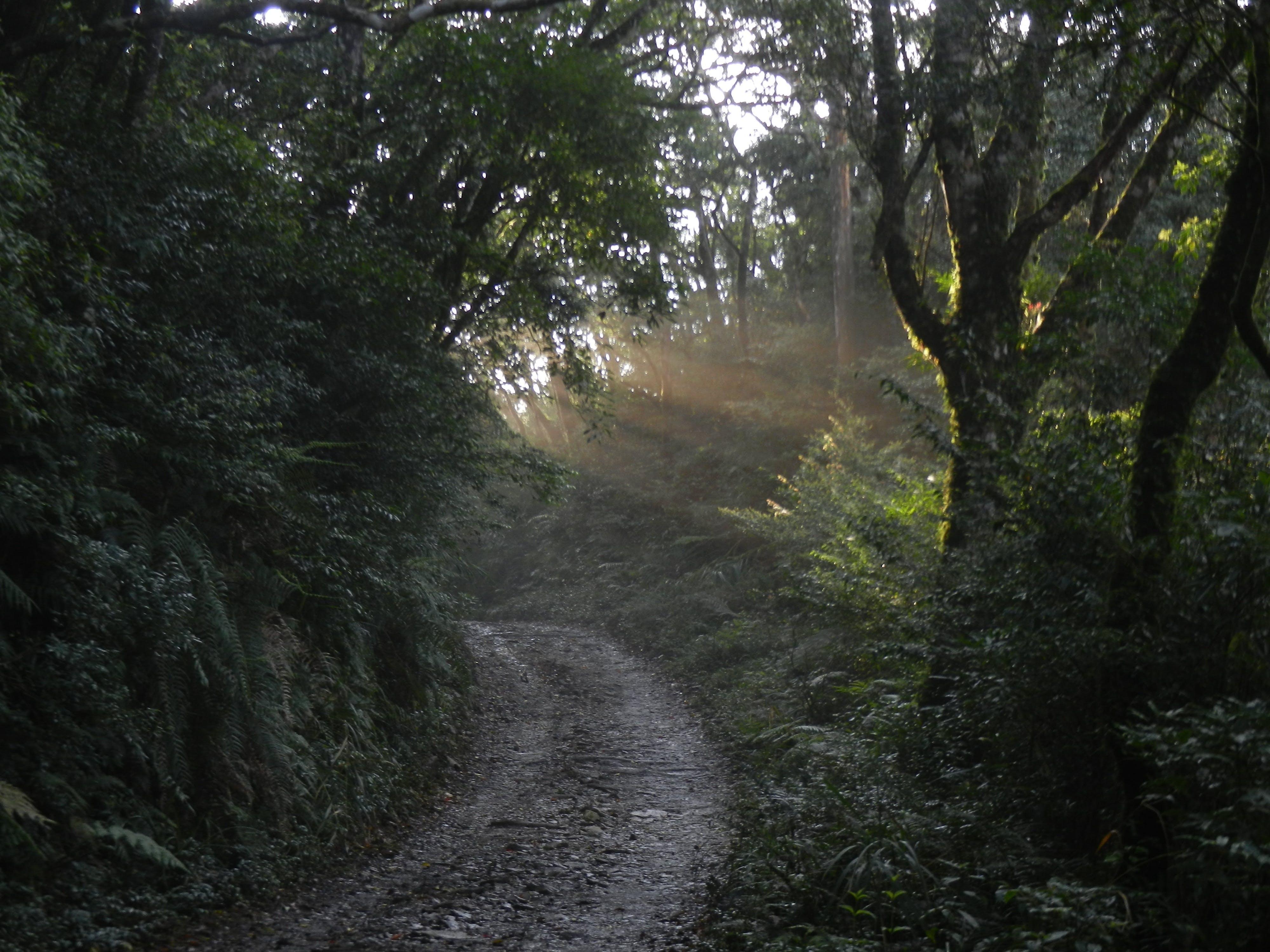 Free stock photo of light, sunshine, forest, woodland