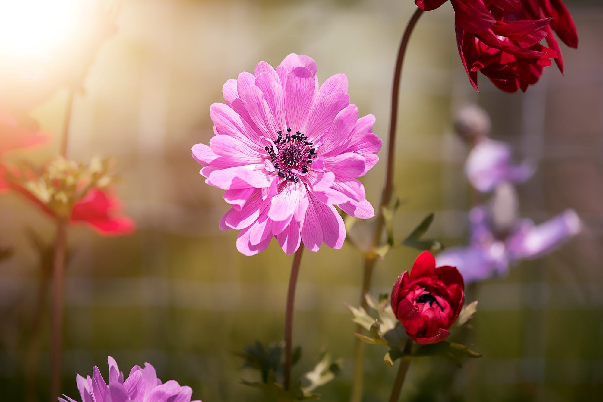 Pink and Red Petal Flowers