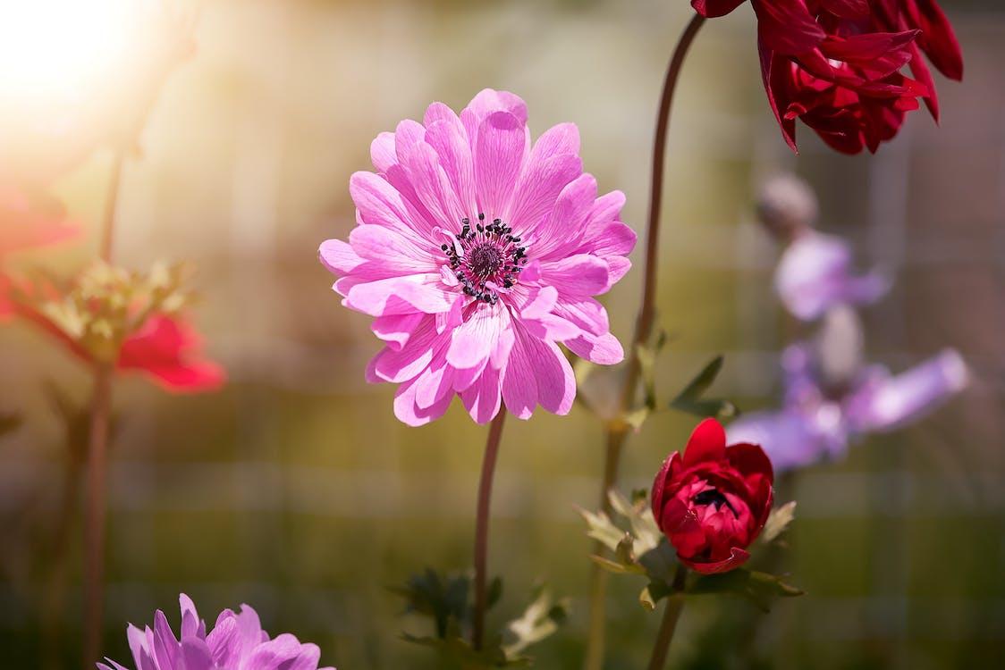 bloeien, bloeiend, bloemachtig