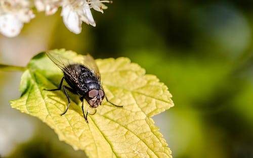 Immagine gratuita di ali, ambiente, animale, biologia