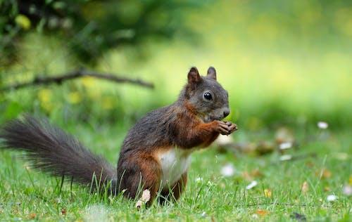 公園, 動物, 可愛, 哺乳動物 的 免費圖庫相片
