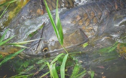 トロピカル, プール, 両生類, 動物の無料の写真素材