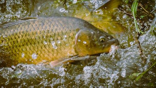 강, 당구, 동물, 물의 무료 스톡 사진