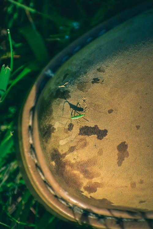 H2O, 공 모양의, 과학, 관념적인의 무료 스톡 사진