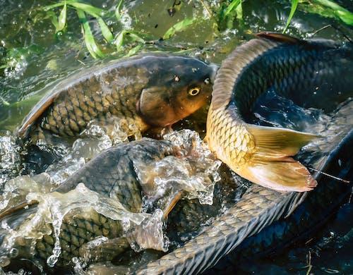 다이빙, 동물, 물, 물고기의 무료 스톡 사진