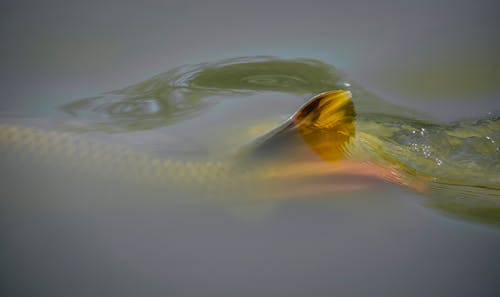 H2O, バブル, モーション, 動物の無料の写真素材