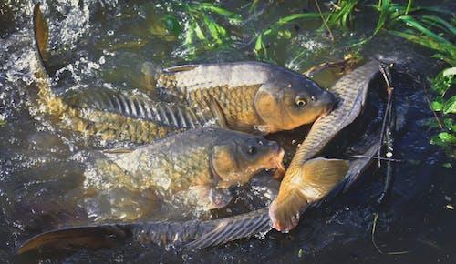 강, 당구, 동물, 머리의 무료 스톡 사진