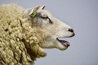animal, agriculture, fur