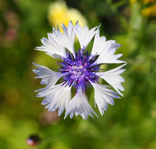 Shallow Focus Photography of Purple and White Flower