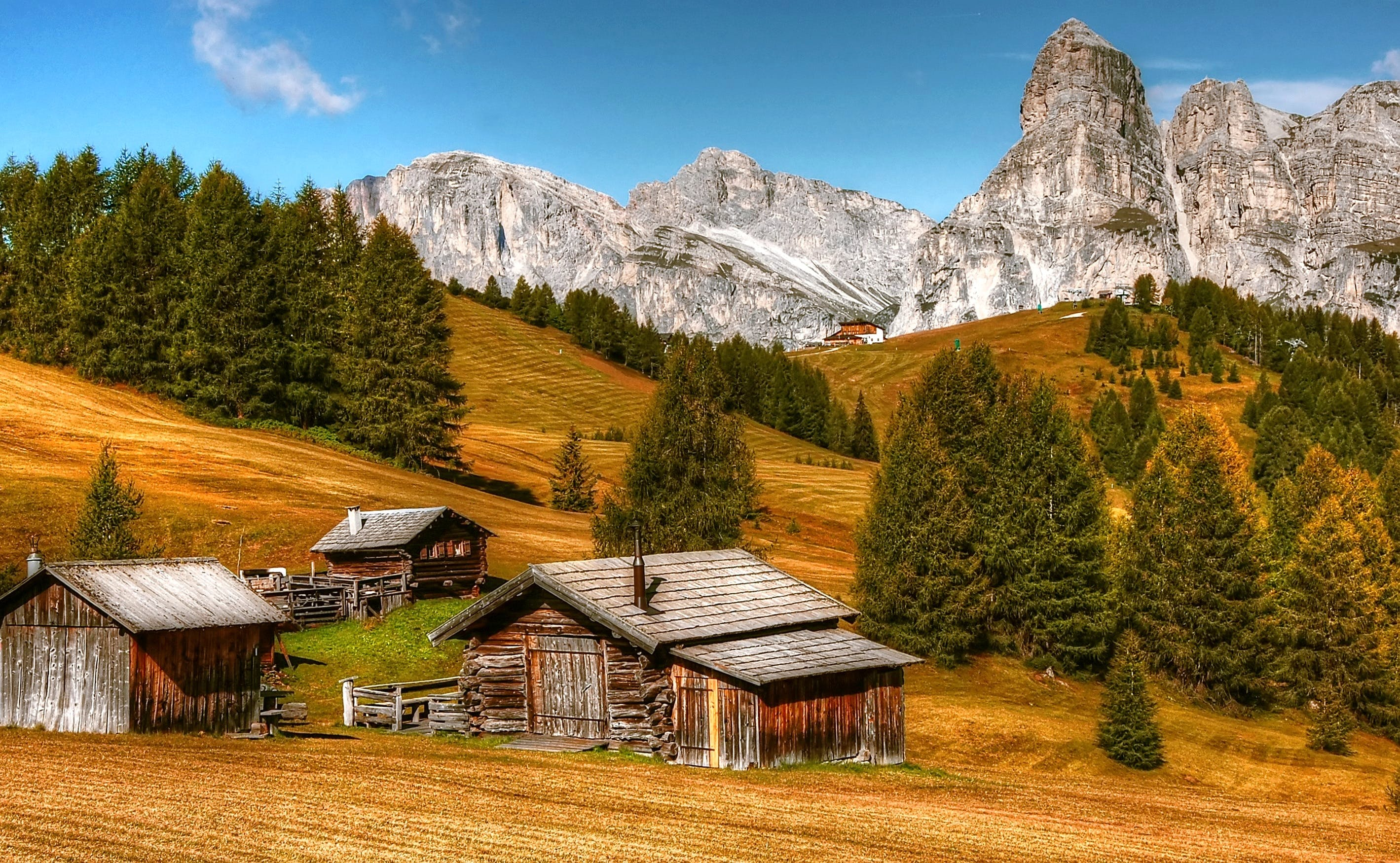cabins, conifers, countryside