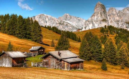 Immagine gratuita di abeti, alberi, case, cielo