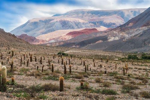 Cacti in desert near bright ridge under sky